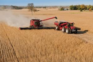 Elevan proyección de producción mundial de soya, maíz y trigo