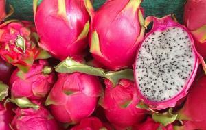 Emprendedores agrícolas de Olmos preparan envío de 5.000 toneladas de pitahaya en 2022