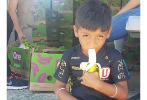 Empresa bananera donó parte de su producción ecológica a los afectados por lluvias en Piura