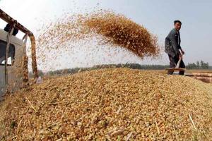 En los primeros siete meses del año, Perú importó más de US$ 166 millones en trigo desde Canadá