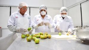 En Moquegua utilizan la cáscara de la tuna para fabricar una innovadora mermelada