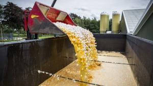 Escándalo de huevos contaminados con pesticida desata la alerta alimentaria en 16 países de Europa y Hong Kong