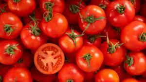 España: la exportación de frutas y hortalizas crece 9.5% en valor y baja 3.5% en volumen en el primer semestre del año