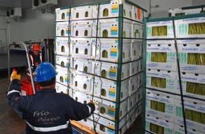 Espárragos representan el 45% del total de las exportaciones por vía aérea del Callao