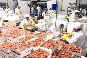 Este año, Ecosac busca incrementar en 133% sus exportaciones de langostinos a China y Corea