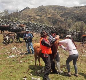 Estudiantes de universidades de Lima conocen la experiencia de Formagro en Áncash