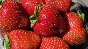Exportación de fresas ya supera los US$ 10 millones