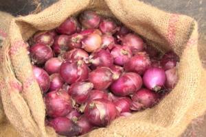 Exportación peruana de cebollas llega a US$ 15.5 millones