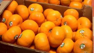 Exportación peruana de mandarinas llegó a US$ 29 millones durante el primer semestre