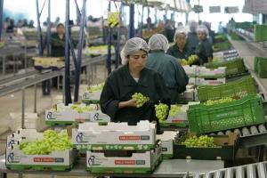 Exportación peruana de uva de mesa creció en valor 18% en el primer trimestre del año
