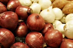 Exportaciones de cebolla fresca llegaron a valores de US$ 21.6 millones en los primeros siete meses del año