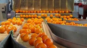 Exportaciones de cítricos crecerían 5% este año