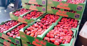 Exportaciones de fresas bordean los US$ 6 millones durante el primer cuatrimestre