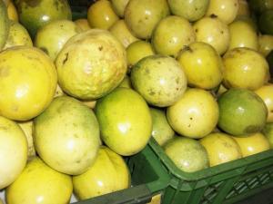 Exportaciones de jugo de maracuyá bordean los US$ 17 millones