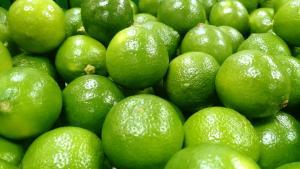 Exportaciones de limón Tahití muestran importante incremento