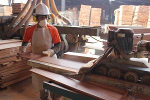 Exportaciones de madera y sus derivados sumaron US$ 68.7 millones