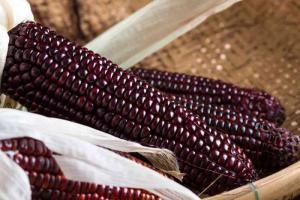 Exportaciones de maíz morado superaron los US$ 199 mil en el primer bimestre de 2020