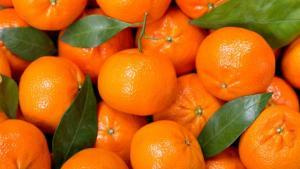 Exportaciones de mandarinas de Sudáfrica crecieron 9% en volumen y 37% en valor entre enero y julio del 2021