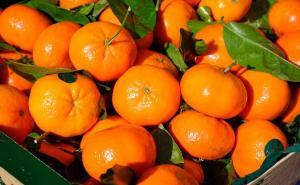 Exportaciones de mandarinas llegan a valores de US$ 43.5 millones