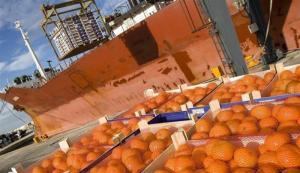 Exportaciones de mandarinas sumaron 15.787 toneladas durante marzo y abril del 2020