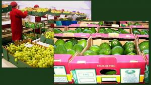Exportaciones de palta y uva superaron los US$ 1.000 millones en lo que va del año