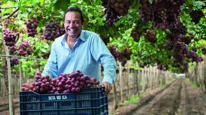 Exportaciones de uva de mesa por parte de Beta crecerían 56.2% en la presente campaña