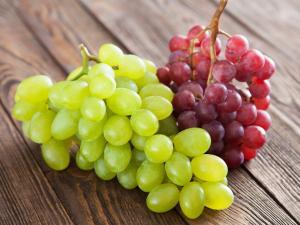 Exportaciones de uvas de mesa de Chile crecerán 12.5% en la campaña 2020/2021