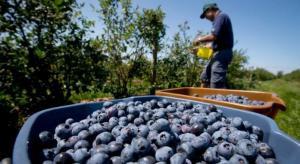 Exportaciones peruanas de arándanos crecerían 60% en la campaña 2018/2019