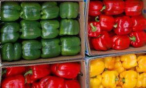Exportaciones peruanas de capsicum crecen 12% en volumen y 13% en valor durante enero-agosto del 2020