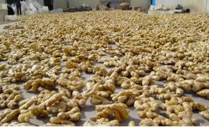 Exportaciones peruanas de jengibre crecen en valor 162% en primeros cinco meses de 2020