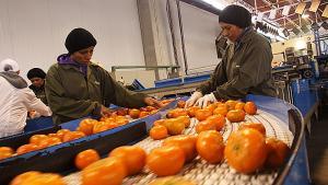 Exportaciones peruanas de mandarinas crecerían 5% este año