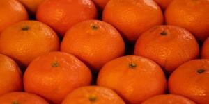Falta desarrollar variedades de mandarina que permitan atender los mercados en la mitad de la campaña