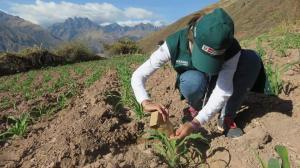 FAO declaró al 2020 Año Internacional de la Sanidad Vegetal