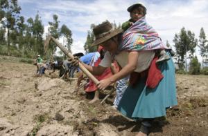 FAO PRESENTA PLATAFORMA DIGITAL SOBRE AGRICULTURA FAMILIAR