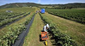 FAO recomienda a gobiernos que declaren la agricultura como actividad estratégica