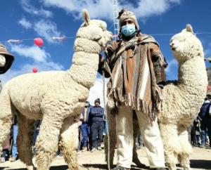 Fibra de alpaca más fina del mundo está en poblado puneño de Quelcaya