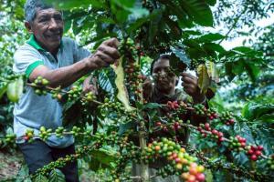 Fomentemos el consumo interno del café 100% peruano