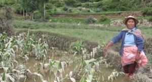 Frente Amplio pide la incorporación de medidas de emergencia para el sector agrario