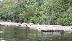 Gobierno de EE.UU. expresa preocupación por cargamento ilegal de madera peruana