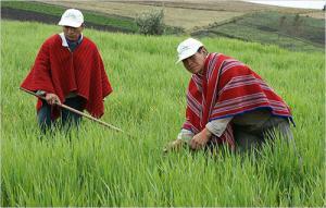 Gobierno promulga Ley que Promueve la Industrialización del Agro