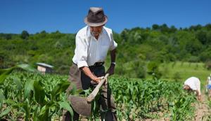 Gremios agroexportadores saludan extensión de Ley de Promoción Agraria hasta el 2031