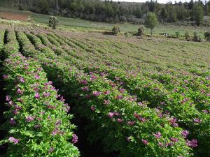 Hay que preservar la salud de los pequeños productores  y mantener su eficiencia productiva