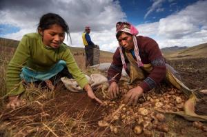 Hernando de Soto exige que también se vacune a 2.2 millones de productores agropecuarios