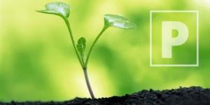"""Hoy se realiza la conferencia virtual """"Manejo del fósforo en cultivos exportables"""""""