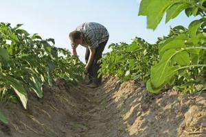 IICA y Bayer lanzan curso virtual para apoyar a productores a cumplir normas internacionales sobre buenas prácticas agrícolas