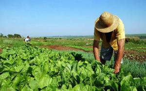 Impacto del Covid-19 en el agro peruano sería limitado