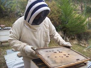 """""""Importación de abejas no pone en riesgo producción apícola de Perú"""""""