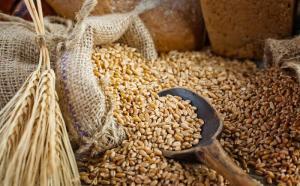 Importación de cebada llega a valores de US$ 33 millones