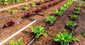 Importaciones de sistemas de riego para la agricultura ascendieron a cerca de US$ 45 millones en 2019
