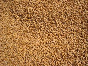 Importaciones de trigo duro llegaron a valores de US$ 247 millones durante el primer semestre